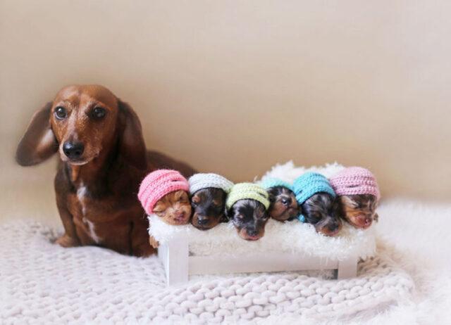il-servizio-fotografico-della-cagnolina-e-dei-suoi-cuccioli
