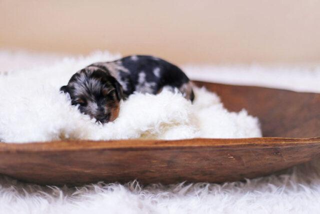 il-servizio-fotografico-della-cagnolina-e-dei-suoi-cuccioli 2