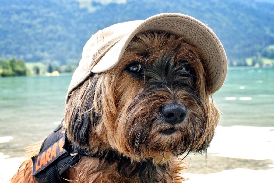 Come prendersi cura dei pets in vacanza