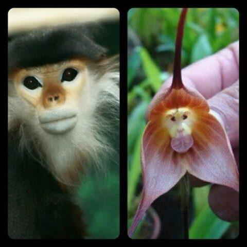 scimmia-fiore
