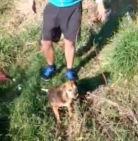 uomo-cane-salvato