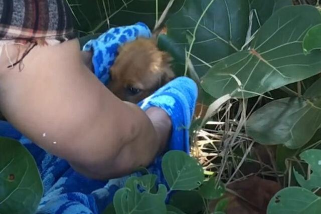 il-cucciolo-trovato-tra-i-cespugli 1