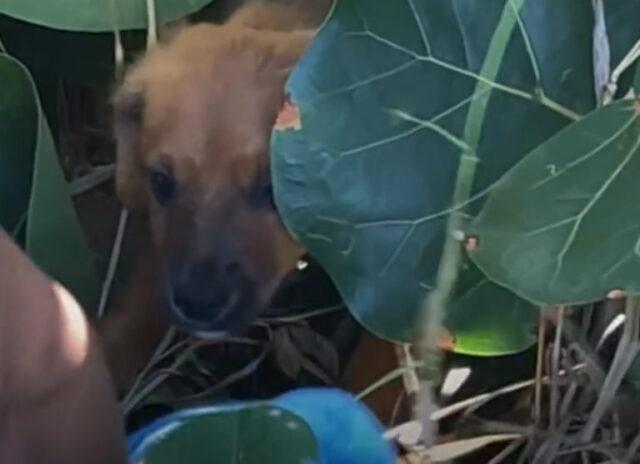 il-cucciolo-trovato-tra-i-cespugli
