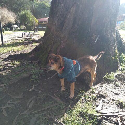 viejito-cane-anziano