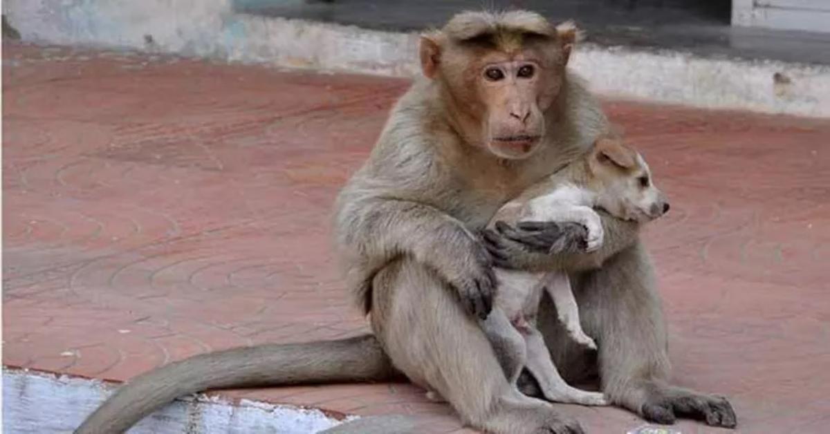 Scimmia adotta un cucciolo di cane randagio