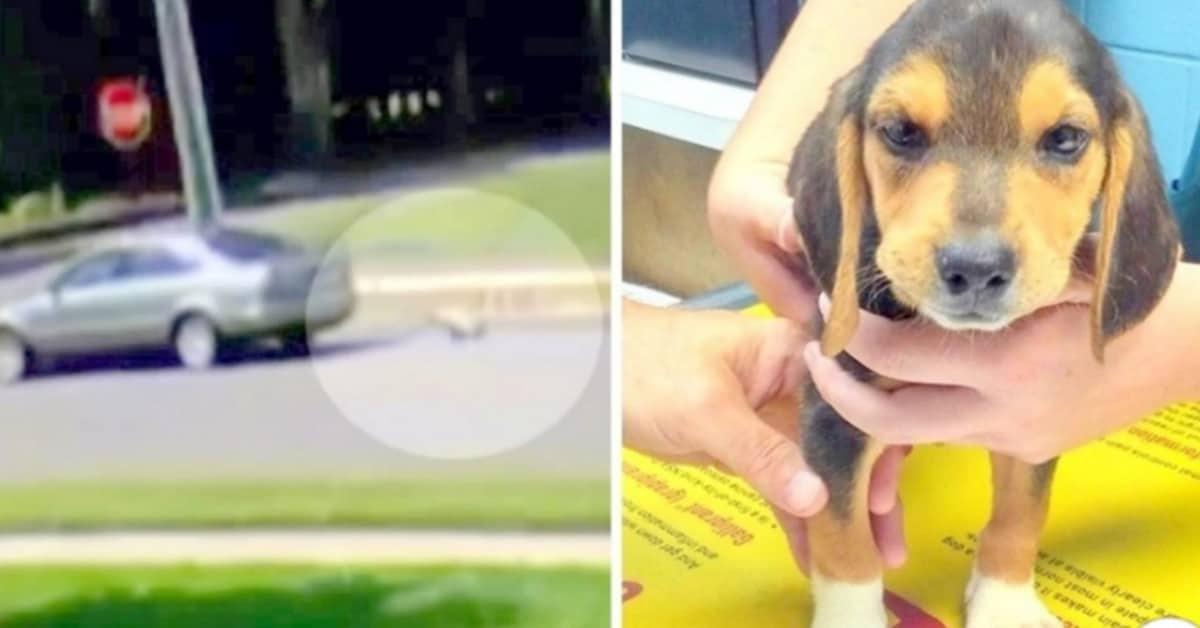 il-cucciolo-abbandonato-sul-ciglio-della-strada-la-polizia-sta-indagando