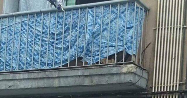 la-terribile-situazione-dei-due-cani-costretti-a-vivere-in-un-balcone