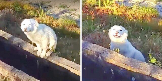 ragazzo-trova-un-cucciolo-abbandonato-in-un-luogo-deserto
