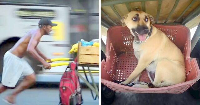 il-progetto-per-i-cani-ed-i-senzatetto