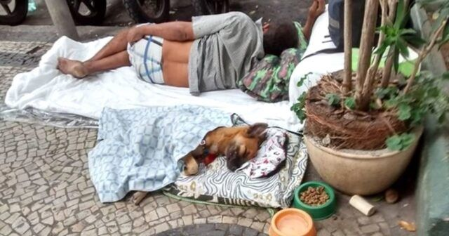 il-progetto-per-i-cani-ed-i-senzatetto 1