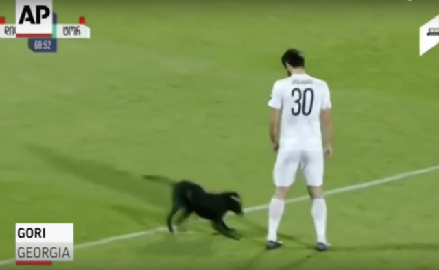 il-cane-che-entra-in-campo-durante-la-partita-di-calcio 1