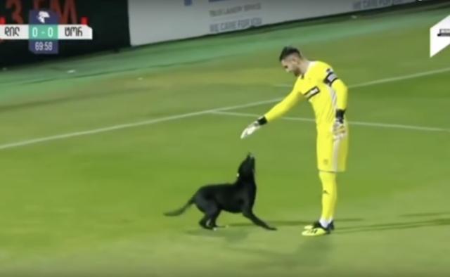 il-cane-che-entra-in-campo-durante-la-partita-di-calcio 2