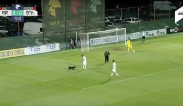 il-cane-che-entra-in-campo-durante-la-partita-di-calcio