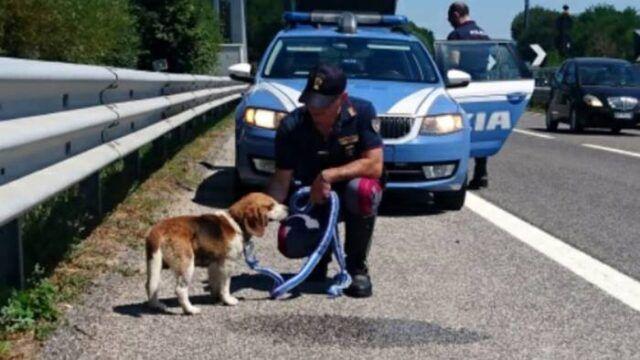 beagle-rudy-polizia