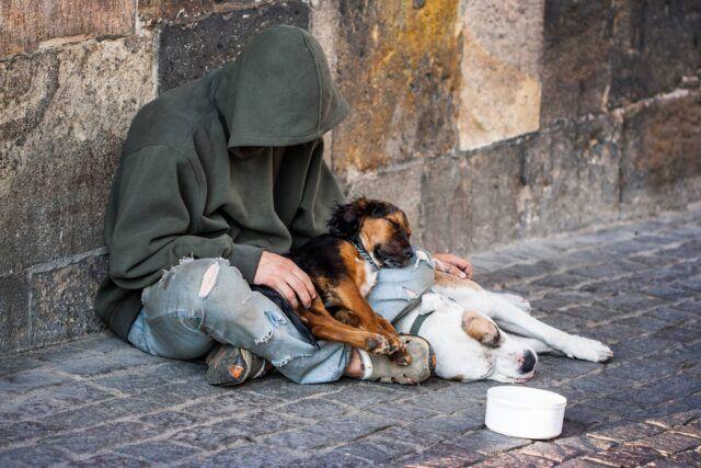 il-progetto-per-i-cani-ed-i-senzatetto 2