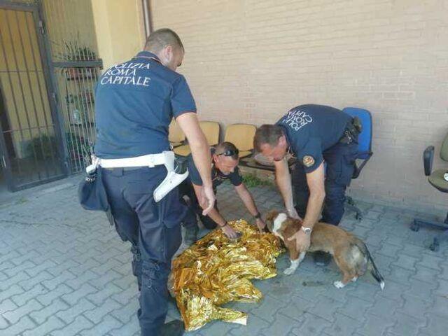 cucciolo-salvato-roma