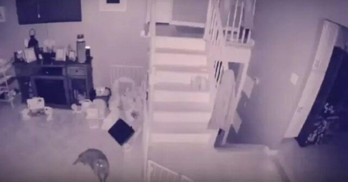 Telecamera di sicurezza immortala un bambino fantasma e il suo animale domestico