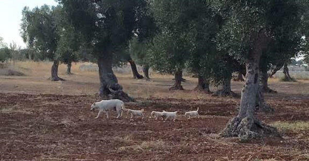 La storia di Olivia, la cagnolina randagia che aveva partorito tra gli ulivi
