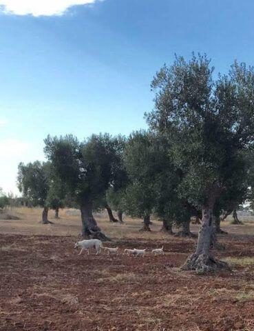 olivia-e-i-cuccioli