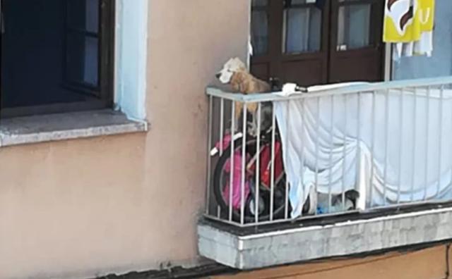i-due-cani-costretti-a-vivere-su-un-balcone 1