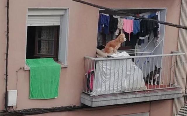 i-due-cani-costretti-a-vivere-su-un-balcone 2