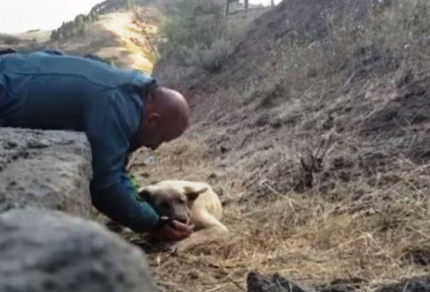 il-meraviglioso-gesto-di-una-guardia-per-salvare-un-cane-in-pericolo 1