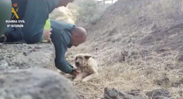 il-meraviglioso-gesto-di-una-guardia-per-salvare-un-cane-in-pericolo 2