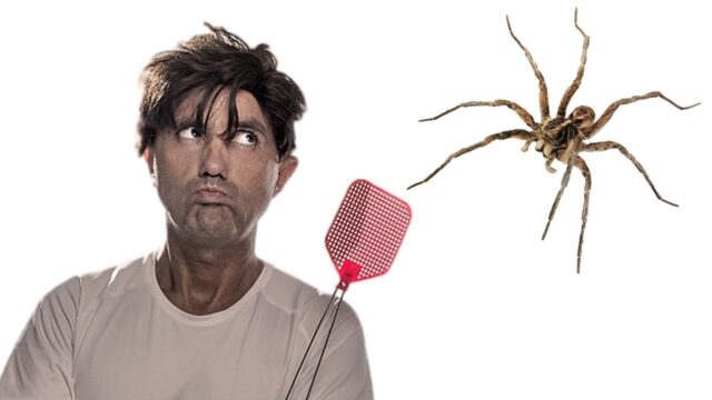 uomo-ragno
