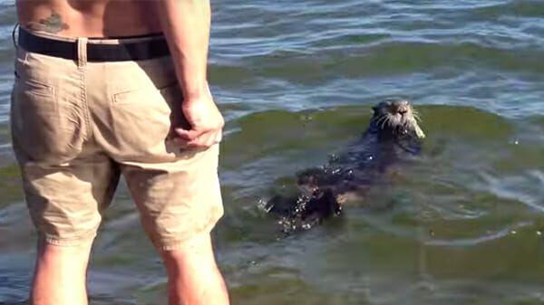 lo-strano-animale-che-si-avvicina-alla-gente-in-spiaggia 2