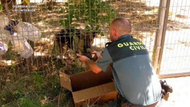 Guardia-Civile-salva-sei-cuccioli-in-grave-pericolo 1