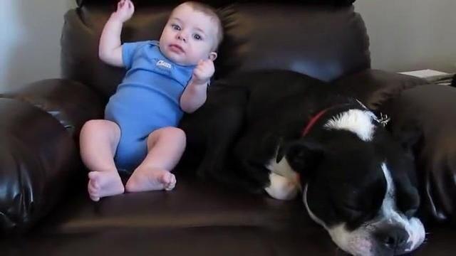 la-reazione-del-cane-quando-il-bimbo-fa-la-puzzetta
