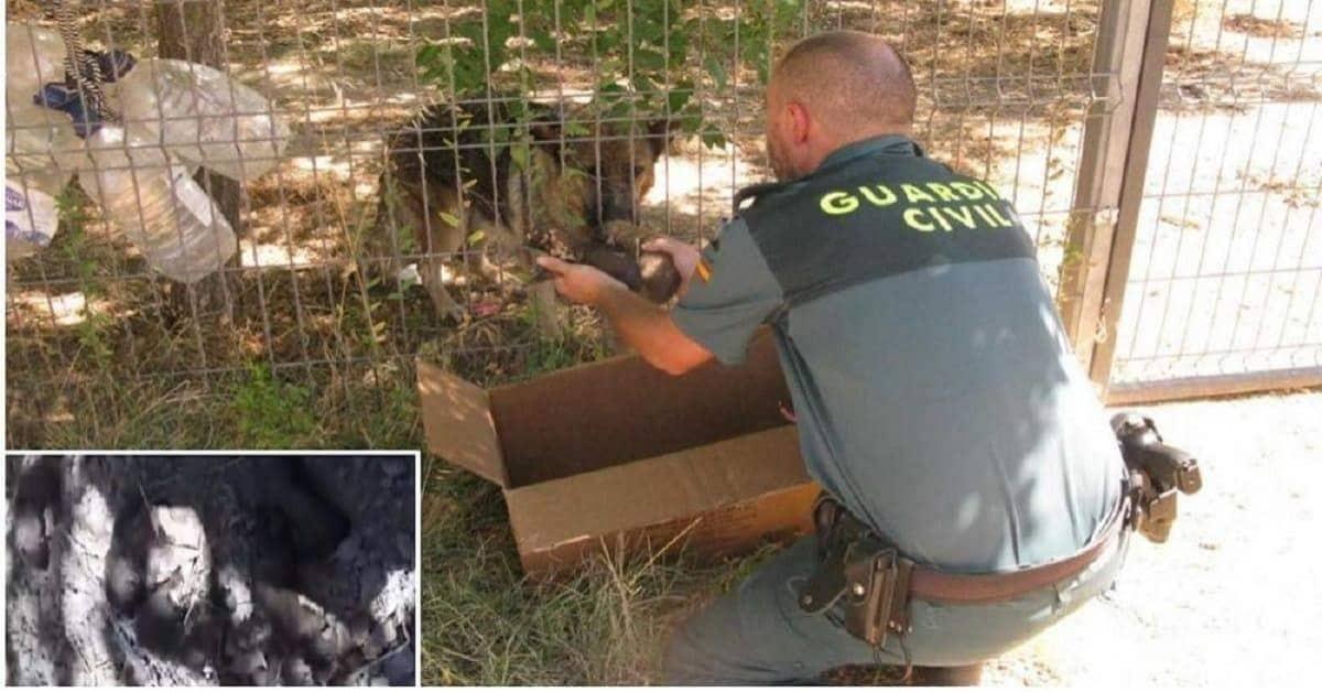 Guardia-Civile-salva-sei-cuccioli-in-grave-pericolo-ma-alla-fine-è-accaduto-qualcosa-di-bellissimo