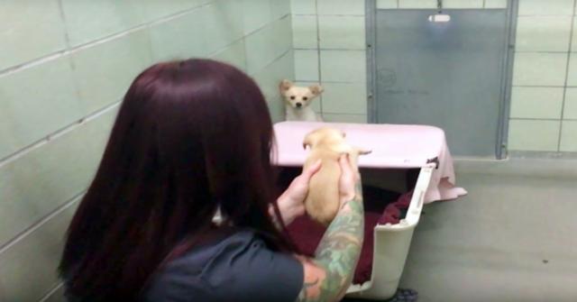 la-commovente.riunione-tra-Cora-ed-i-suoi-cuccioli-che-ha-commosso-tutti-i-volontari-del-rifugio