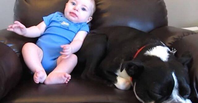 la-reazione-del-cane-quando-il-bimbo-fa-la-puzzetta-proprio-vicino-a-lui