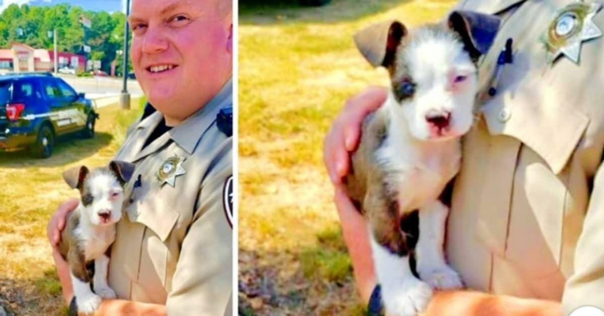 l'eroico-salvataggio-del-cucciolo-abbandonato-da-parte-del-vice-sceriffo-Hart