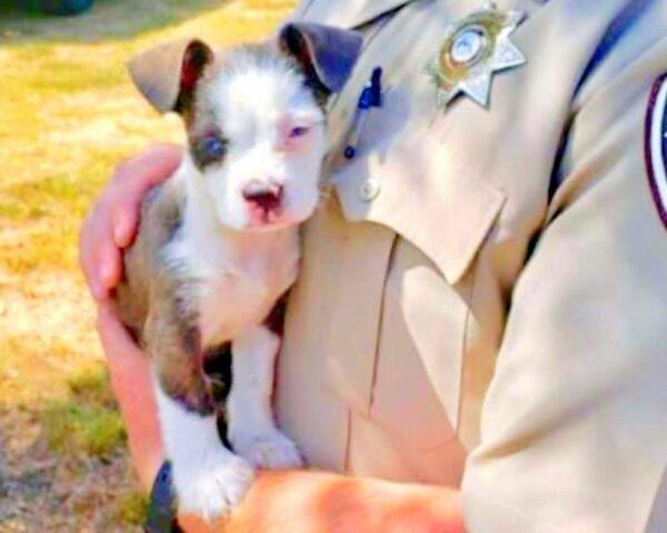 l'eroico-salvataggio-del-cucciolo-abbandonato 1