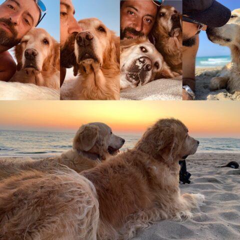 Filippo-Gigliotti-cani