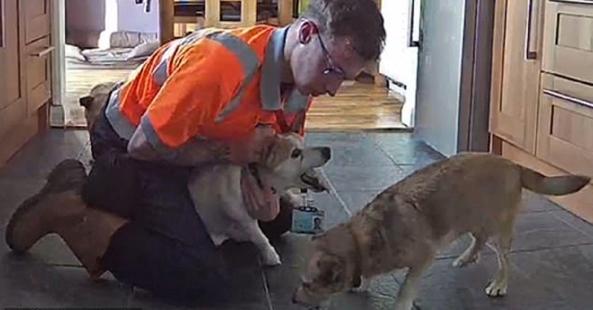 Uomo usa manovra di Heimlich per salvare il suo cane, un Jack Russell