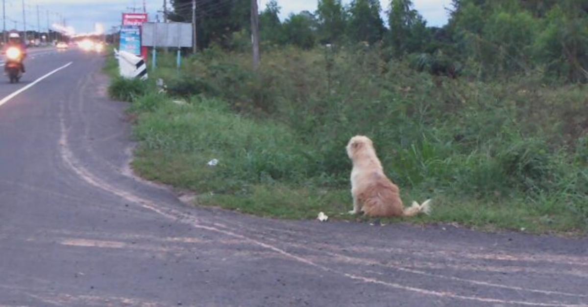 La storia di Bon Bon, il cane che aspetta la sua famiglia per quattro anni, sul ciglio della strada