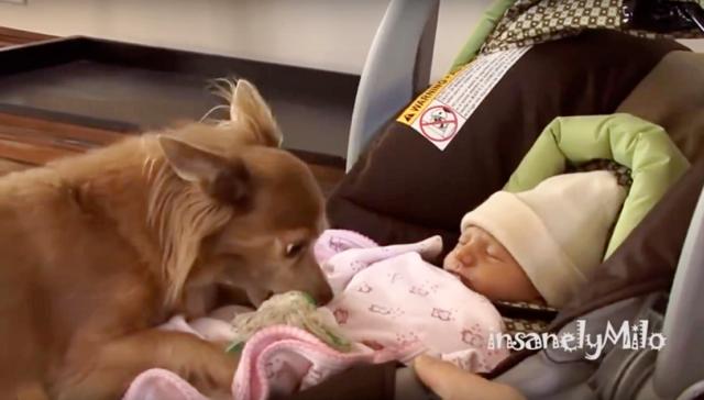 il-primo-incontro-tra-Milo-e-La-neonata 1