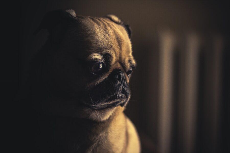 Stress da rientro cani