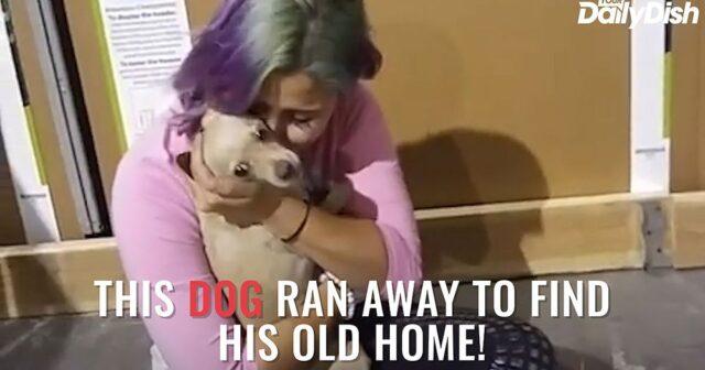 Riesce-a-fuggire-dalla-nuova-casa-per-tornare-dalla-sua-mamma-umana 2