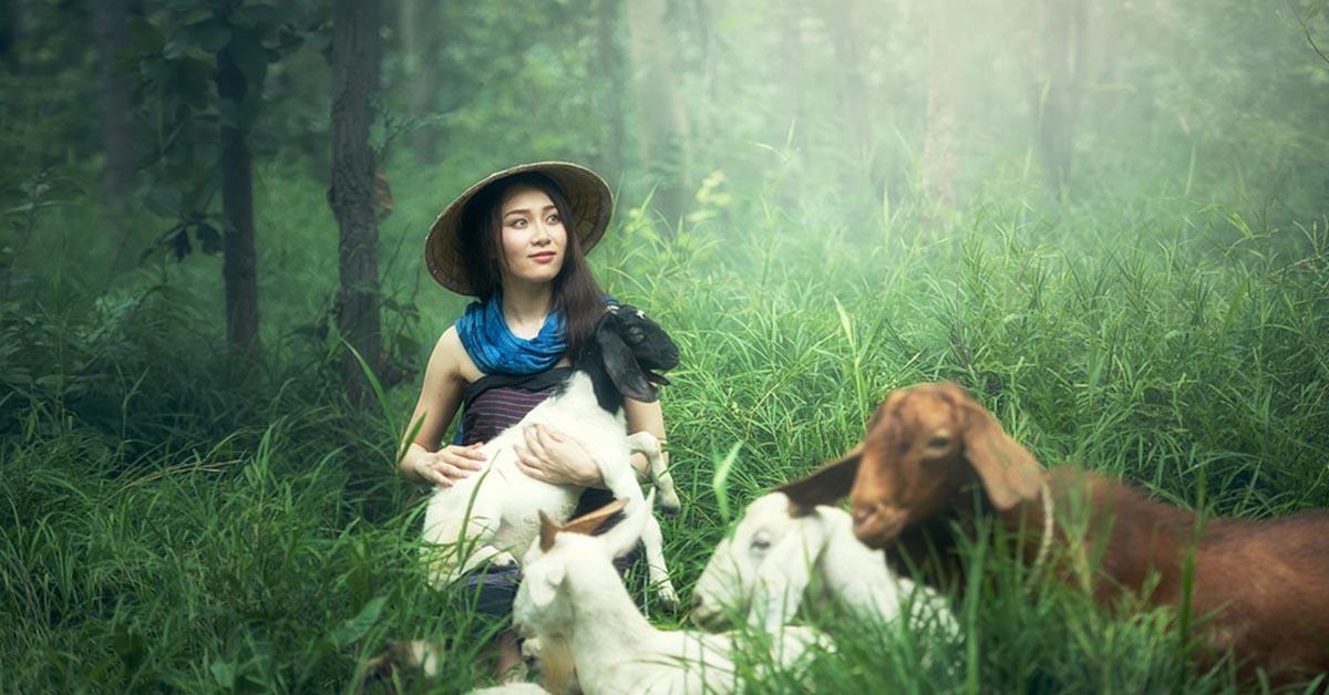 Pet therapy: gli animali più bizzarri per il supporto emotivo