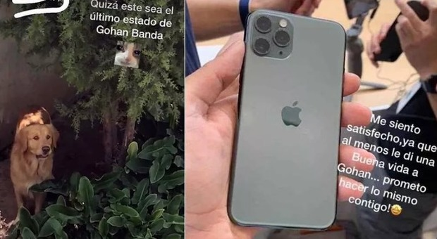 baratto-cane-iphone