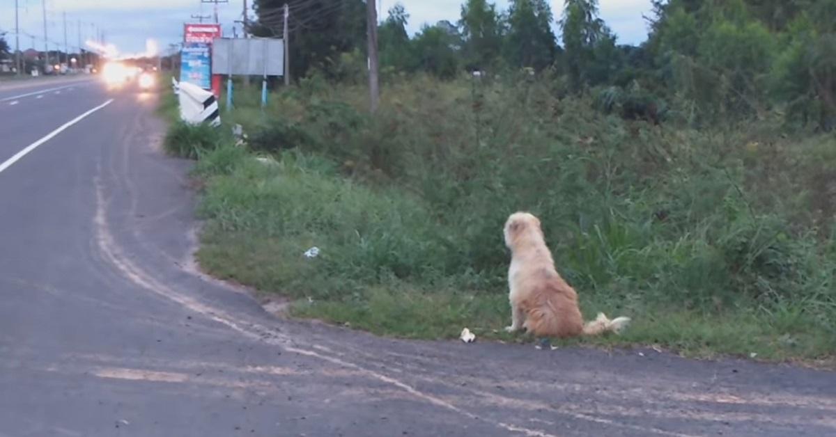 BonBon, il cane che aspettava il suo umano sul ciglio della strada