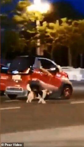 cane-macchina-rossa