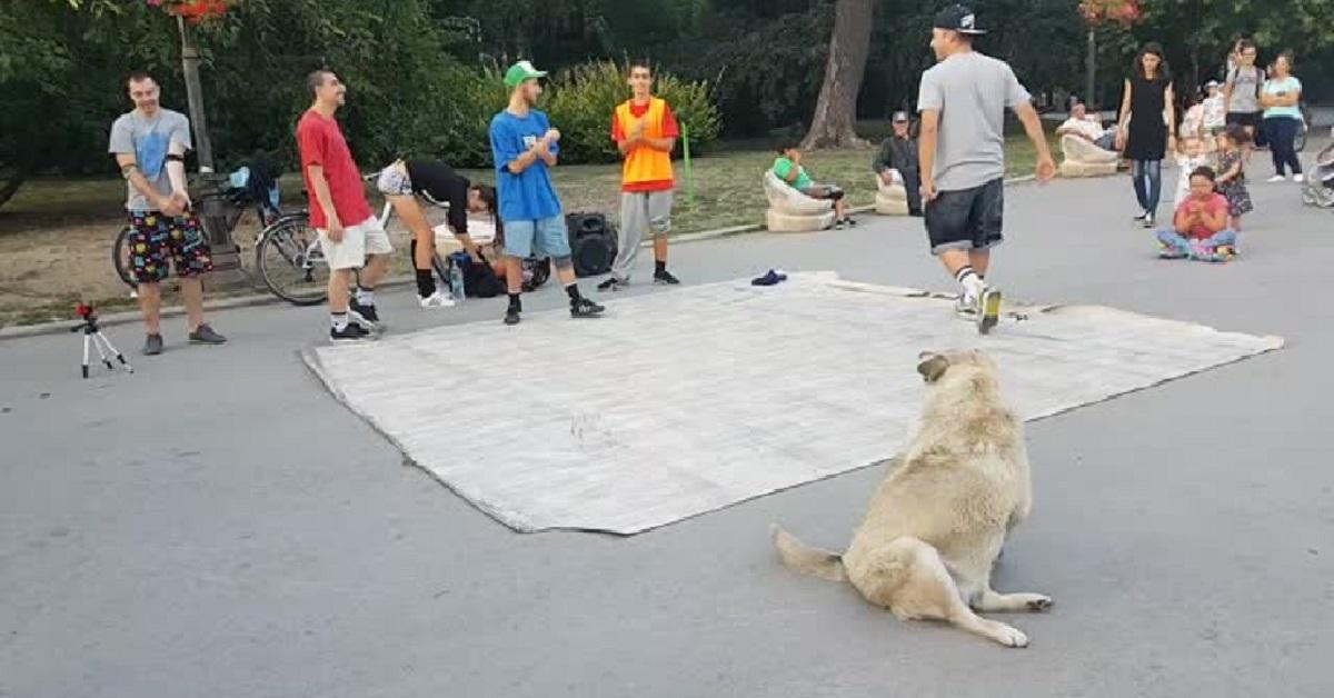 Il cane randagio che balla break dance