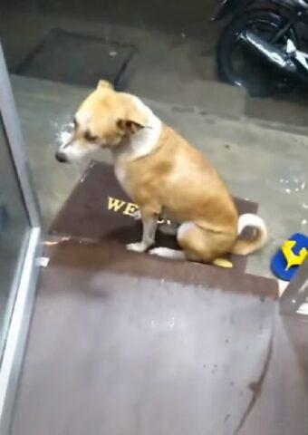 cane-porta