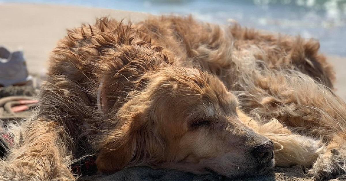 La storia della cagnolina che sognava di vedere il mare raccontata da Filippo Gigliotti