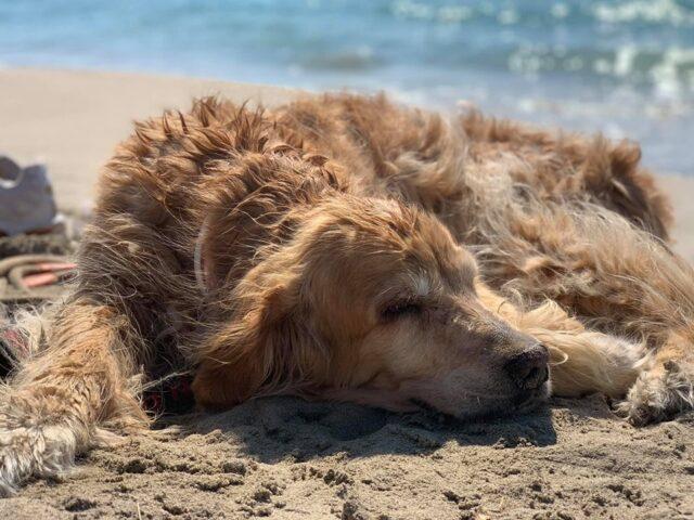 cane-spiaggia